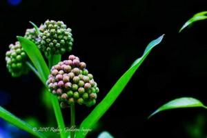 unbloomed flower